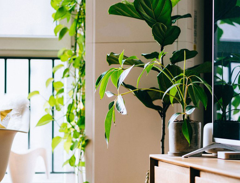 Our Top Tips for Creating an Eco Friendly Home