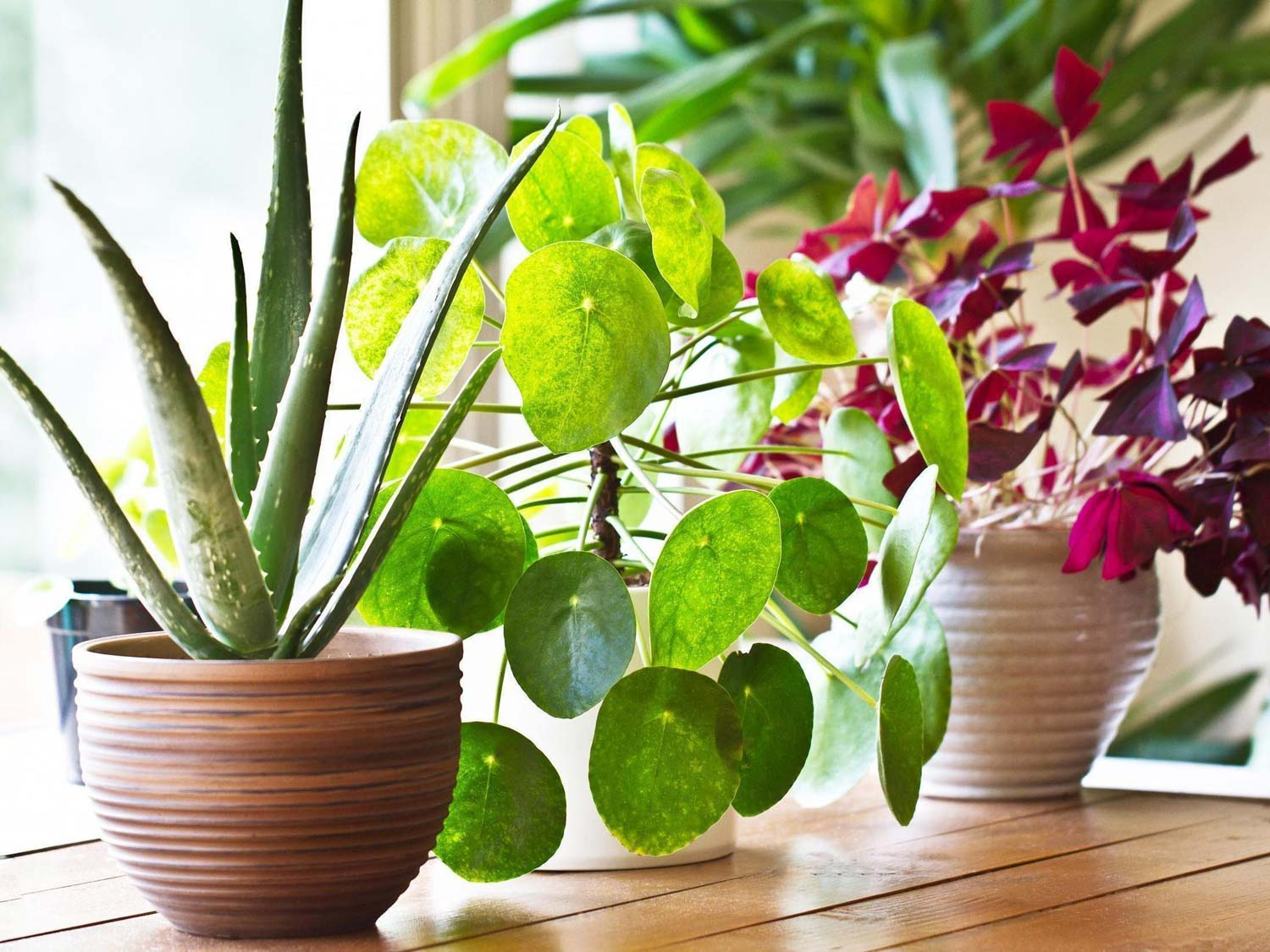 Houseplants 101: What Kind To Get And Where To Put Them